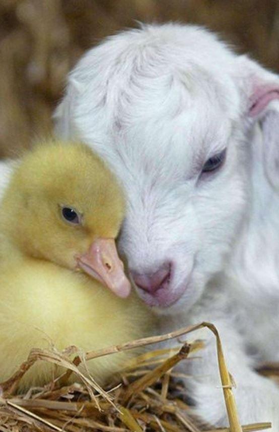可愛い動物22