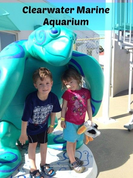 What to expect when visiting the home of Winter, the dolphin (AKA, Clearwater Marine Aquarium in Clearwater Beach, Florida)