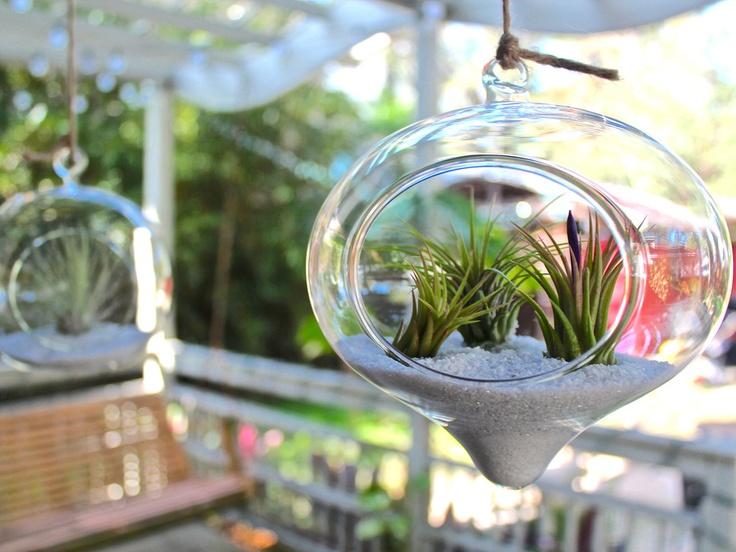 hanging terrarium air plant duo pack - Kopfteil Plant Knig