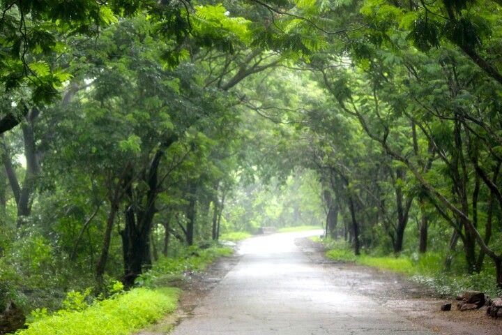 Sanjay Gandhi National Park, Mumbai, India.