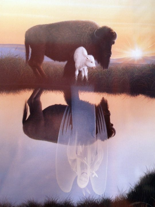 August 20, 1994: Miracle, the first white female buffalo calf in over a century, was born in Janesville, Wisconsin, to non-Native ranchers. The birth of a white buffalo calf was prophesied by Native people generations ago, and she is seen as a sign of tribal unity and peace by believers all across the country. Thousands pilgrimage to see her, and Miracle received worldwide media attention. By: Terri Jean