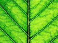 Photosynthesis is the process of converting light energy to chemical energy and storing it in the bonds of sugar. This process occurs in plants and some algae (Kingdom Protista).After this short definition, you can try out your knowledge about the Photosynthesis.You should know that the questions in this quiz are vary important, because without the Photosynthesis process there would be no life on earth as we know today.We invite you and your friends to play this quiz and learn some…