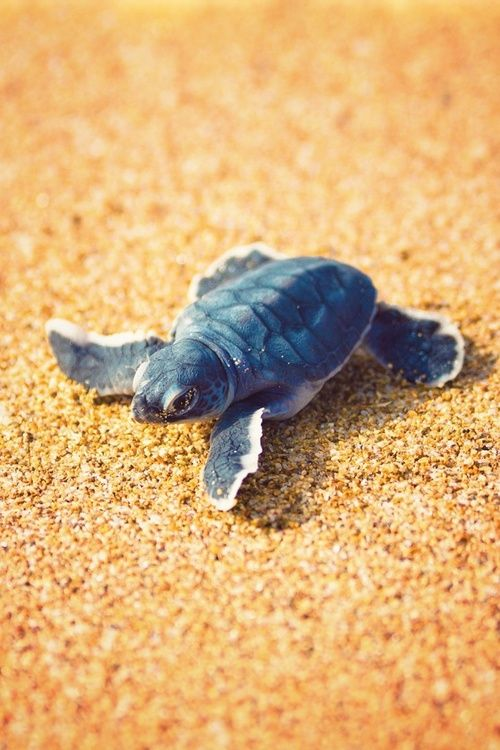 turtle, sand, and cute image