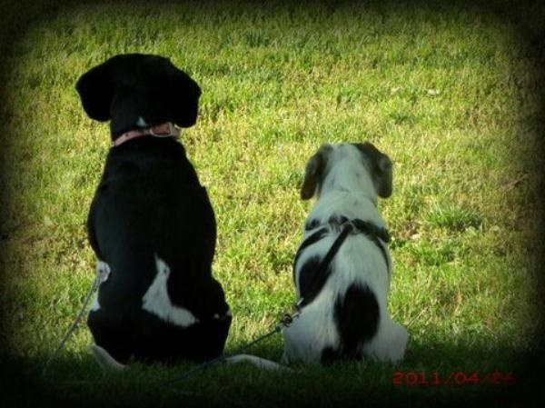 """""""My beagles Sadie and Maximus my bird Sydney they are my joy mylaughter my constant companions in my pain."""" #iivhope"""