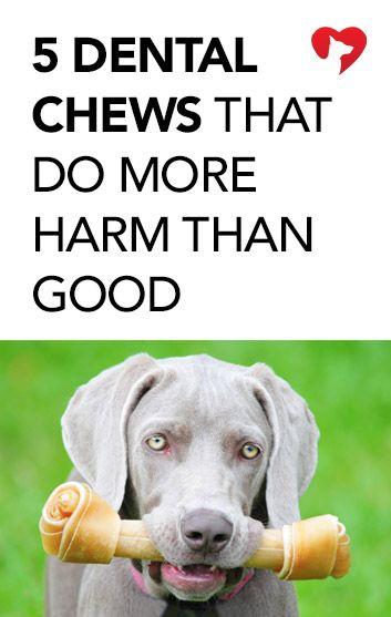 5 Dog Dental Chews That Do More Harm Than Good http://iheartdogs.com/5-dog-dental-chews-that-do-more-harm-than-good/