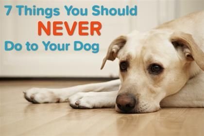 Don't Ever Do These Things to Your Dog | pet360.com