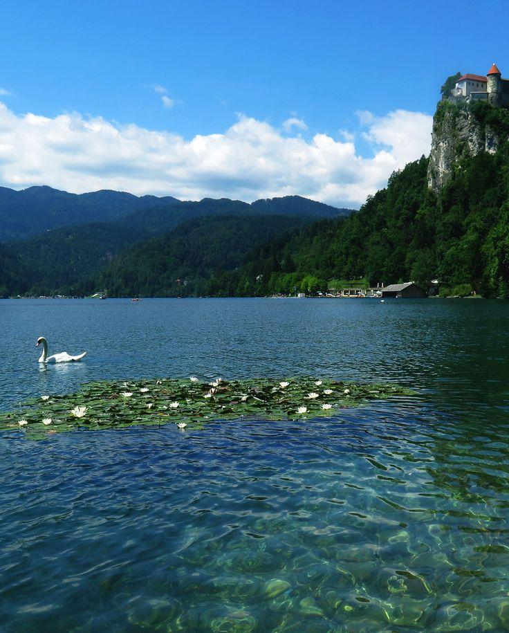 Tussen de bergen en de bossen van Slovenië vind je een grote variëteit aan meren. In totaal zijn 321 plassen water als meer geclassificeerd. Sommigen zijn niet veel groter dan een vijver, maar er zijn ook diverse grote meren waarop je kan varen en in kunt zwemmen. Als je enkele Sloveense meren wilt bezoeken hebben we hier wat tips voor je: