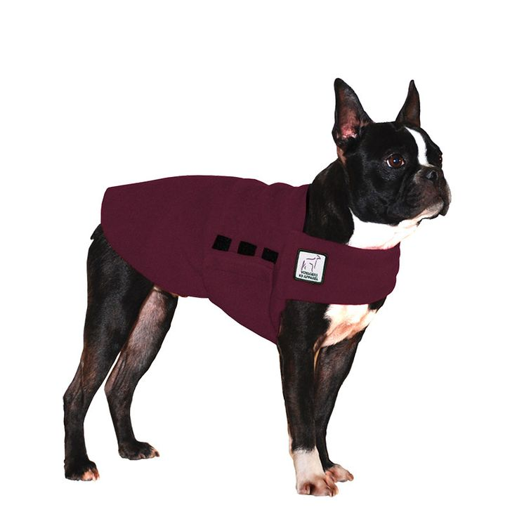 Burgundy Maroon Boston Terrier Dog Tummy Warmer, great for warmth, anxiety and laying with our dog rain coat. High performance material. Made in the USA.