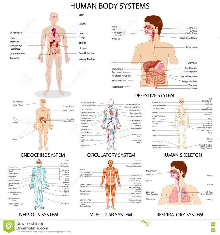 8 best WinHeartz images on Pinterest | Anatomy, Cardiovascular ...