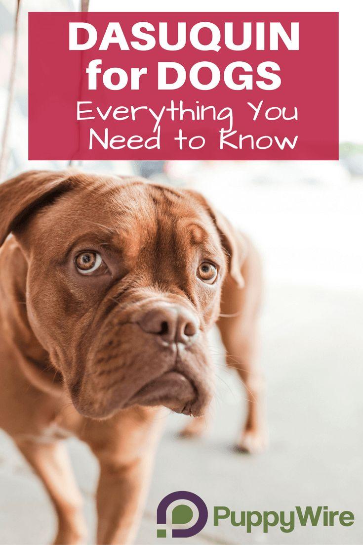 Can I Give My Dog Bcaa