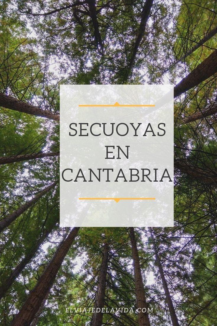 Secuoyas En Cantabria En 2020 Secuoyas Viajar Por España Viajes