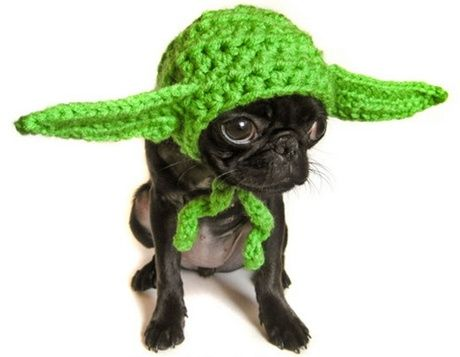Yoda: Hats, Halloween Costumes, Dogs Costumes, Pet, Stars War, Costumes Halloween, War Dogs, Starwars, Animal