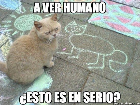 Los gatos son muy exigentes con sus retratos        Gracias a http://www.cuantocabron.com/   Si quieres leer la noticia completa visita: http://www.estoy-aburrido.com/los-gatos-son-muy-exigentes-con-sus-retratos/