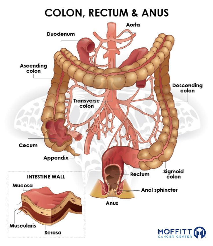 10 best digestive system images on Pinterest | Cuerpo humano ...