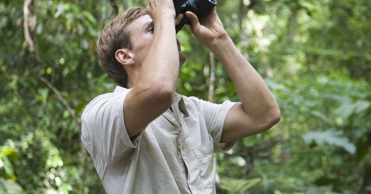 Animales y plantas que son nativas de Colombia. Colombia es un país de muchas riquezas naturales. Una gran parte del país está cubierta de selvas tropicales, donde hay un montón de animales y plantas nativas que sólo encuentran su hogar en Colombia. Todo el país se caracteriza por una alta biodiversidad. Especialmente en el caso de la vegetación, que en Colombia tiene la tasa más alta de ...