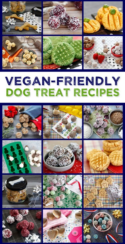 Vegan Dog Treat Recipes | Even if your kitchen is a vegan-only cooking zone, you can still make tasty healthy homemade treats for your dog!