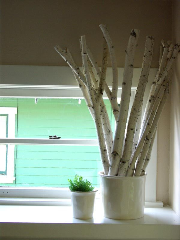 Love Birch Trees .