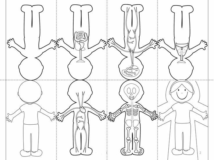 τα συστηματα του ανθρώπινου σωματος χαρτοδιπλωτικη