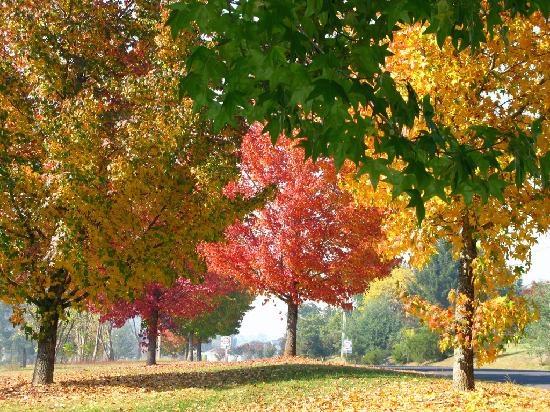 Beautiful #Bright in Autumn #Australia