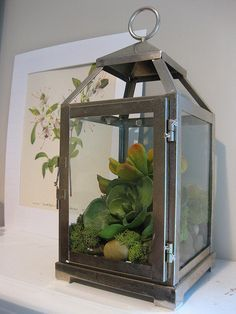 Image Result For Ikea Lantern Succulents
