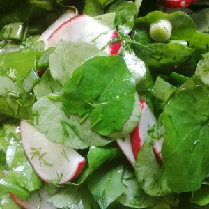 The new green salad: healthy and delicious!