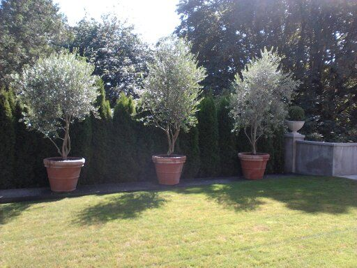 Evergreen Potted Plants Patio