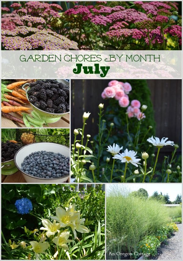 Here's a reminder of what you can be doing in your yard & garden during July. Use it as a guideline, not that you have to do everything - except harvesting flowers and vegetables of course!