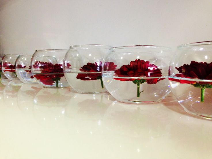 Rosas y mas rosas!!!