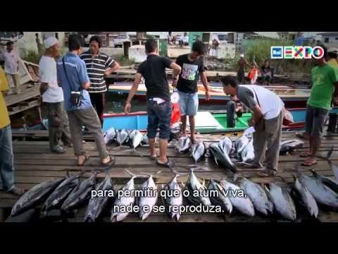 """Elogio às anchovas -  Sottotitolo Ao escolhermos """"peixes pequenos"""" no mercado, em vez dos grandes, ajudamos a proteger o ecossistema marinho. Melhor comer muitas anchovas hoje do que não ter mais atum no futuro #raiexpo #expo expomilano #expo2015 #worldsfair #milan #Itália #brazil"""