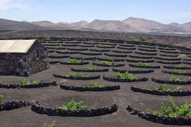 La Geria: Lanzarote's Volcanic Vineyards
