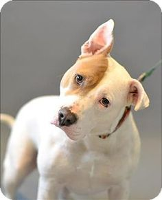 Hyde Park, NY - Terrier (Unknown Type, Medium) Mix. Meet Sidney, a dog for adoption. http://www.adoptapet.com/pet/17464065-hyde-park-new-york-terrier-unknown-type-medium-mix