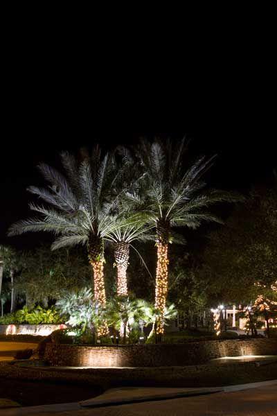 Mejores 56 imgenes de outdoor tree lighting en pinterest christmas lights alaqua1 aloadofball Gallery
