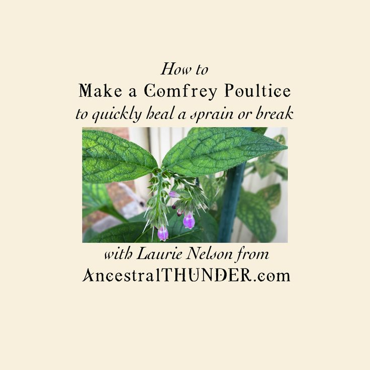 Laurie uses herbs for healing, showing you how to make a Comfrey Poultice, used to quickly heal a badly sprained ankle or broken bone. Blog post here: http:/...