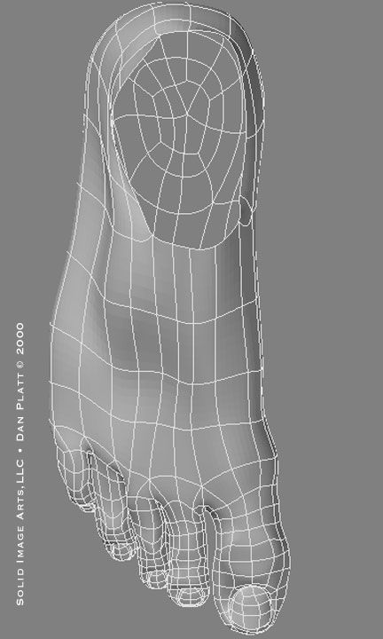 Wireframe of foot from the top