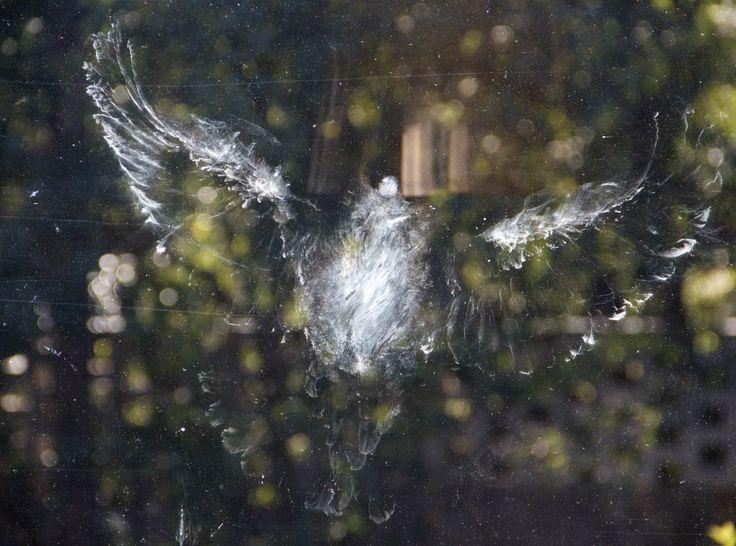 Linnun jälki ikkunassa (selvisi).