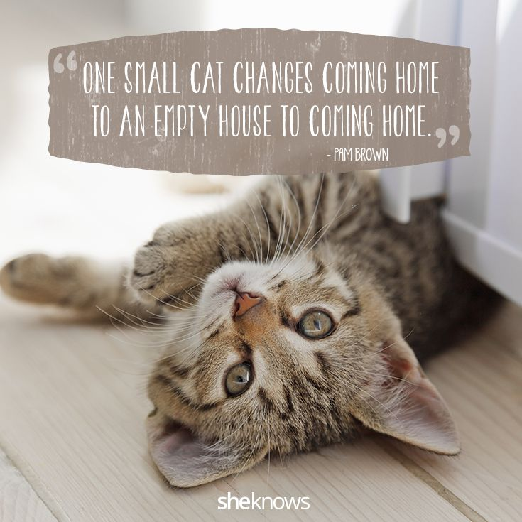 50 Cat quotes that perfectly explain your love for kitties I #Cat #Quotes