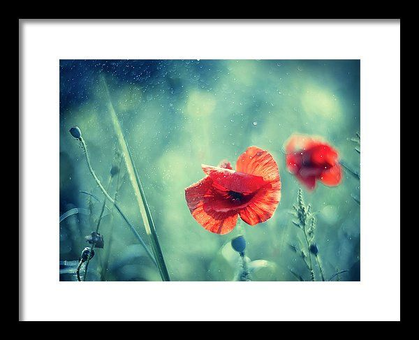 Framed Print featuring the photograph Red Poppy On Aqua by Oksana Ariskina. A red garden poppy flower in a sparkling bokeh aqua turquoise sunny abstract background. Available as mugs, posters, greeting cards, phone cases, throw pillows, framed fine art prints, metal, acrylic or canvas prints, shower curtains, duvet covers with my fine art photography online: www.oksana-ariskina.pixels.com #OksanaAriskina