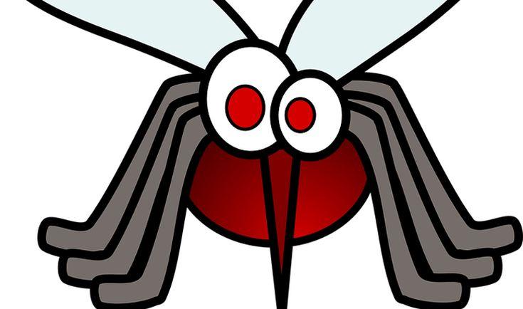 Árbol de té para las picaduras de mosquitos - Trucos de salud caseros