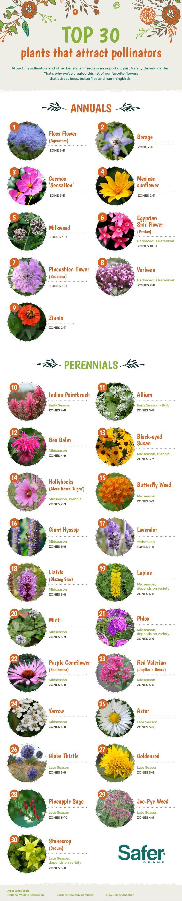 Top 30 plants that attract bees, butterflies and hummingbirds - #pollinators #infographic #flowers
