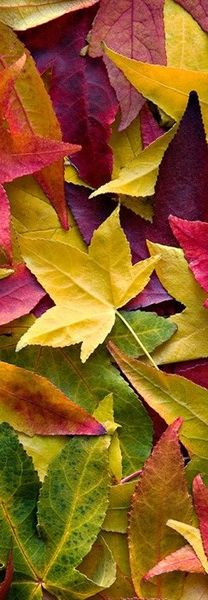 Fall leaves with color