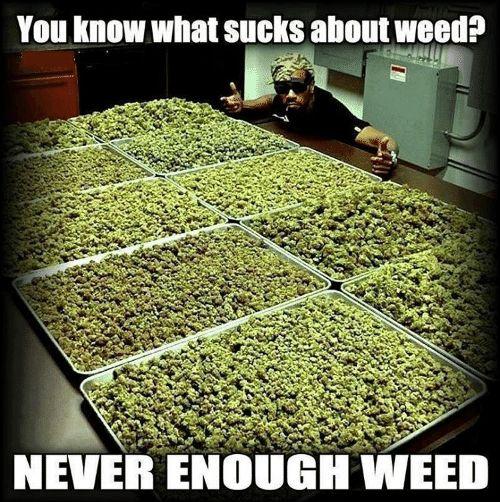 True That! Tag a #weed lover!  #Marijuana #Cannabis #PotExam #California #MarijuanaMovement #weedwednesday #weedjokes