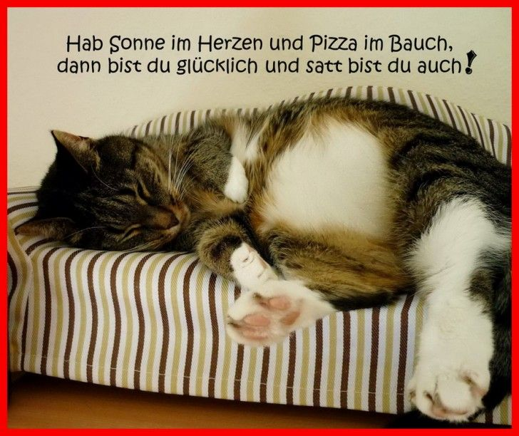 die besten 25 witzige tiere ideen auf pinterest lustige bilder von tieren katzen und. Black Bedroom Furniture Sets. Home Design Ideas