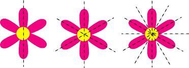 flowers symmetry - Google Search