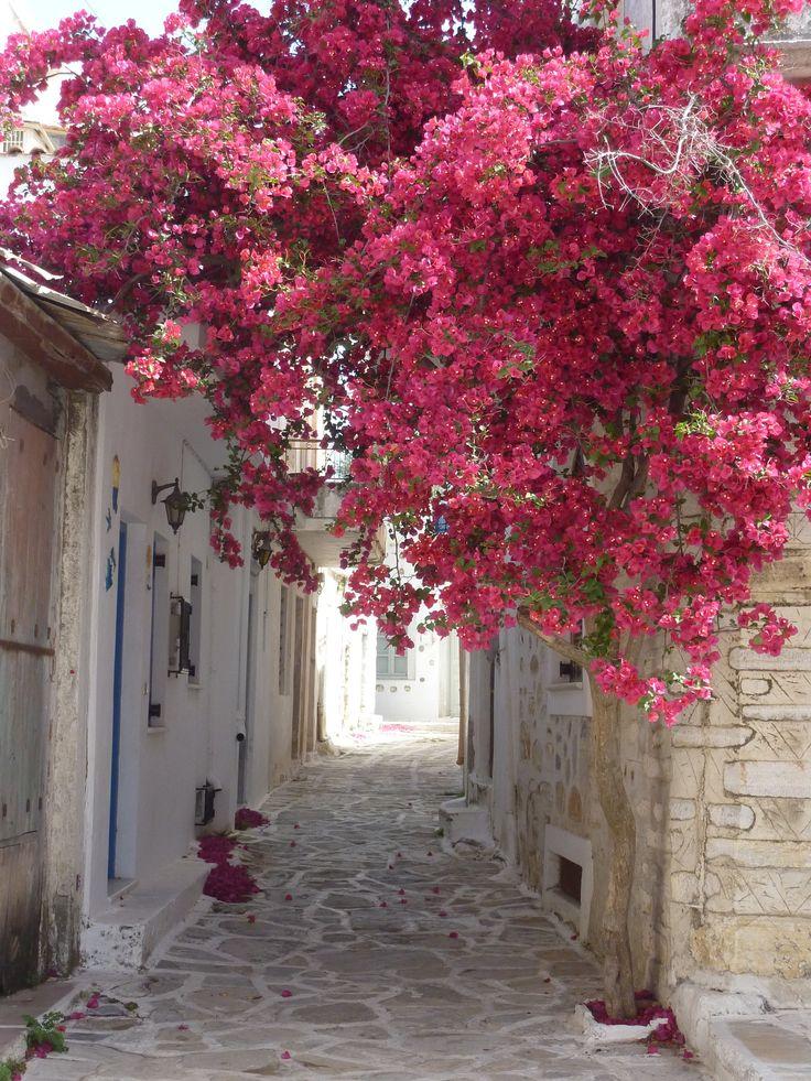 Greek Islands - Street in Chalki