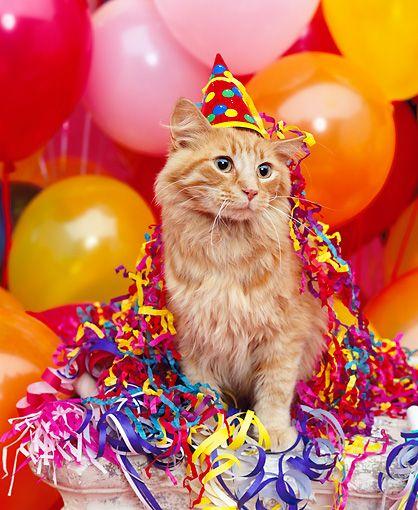 """Birthday Orange Cat: 169 Best """"Happy Birthday"""" Cats... Images On Pinterest"""