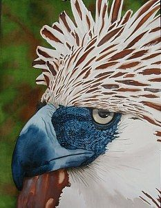 Ruth Tatter: Philippine Eagle