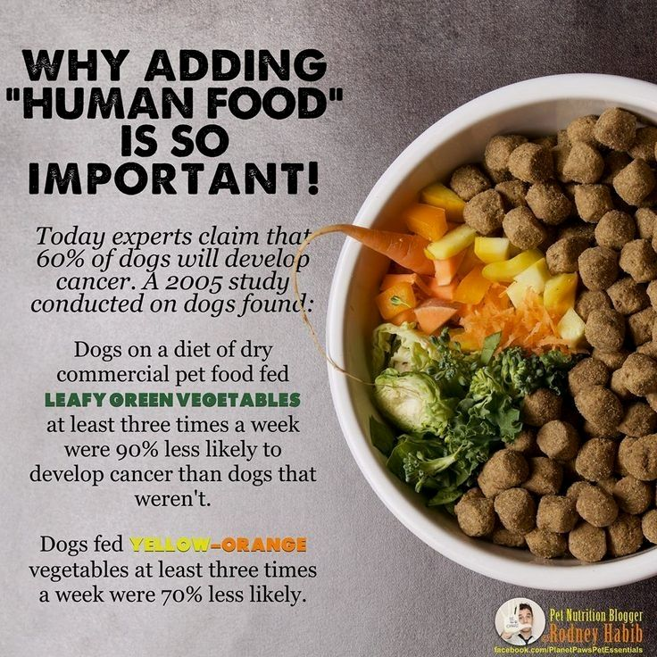 Find The Best Organic Dog Foods Which Are The Top Brands On The Market And Which Dog Foods Offer The Best Valu Dog Food Recipes Make Dog Food Organic Dog Food