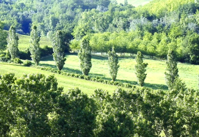 Pictures Tenuta Gorgiano | Poplars summer