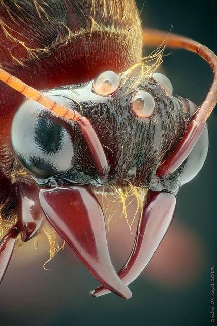 75 best images about Terrifying insects...oh why? on ...
