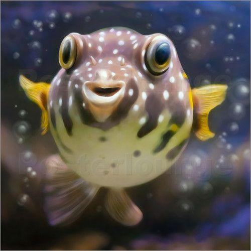 photoplace - fugu